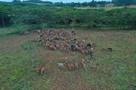 """Destinasi wisata baru, """"mini ranch"""" Jayatama kedua siap dibangun"""