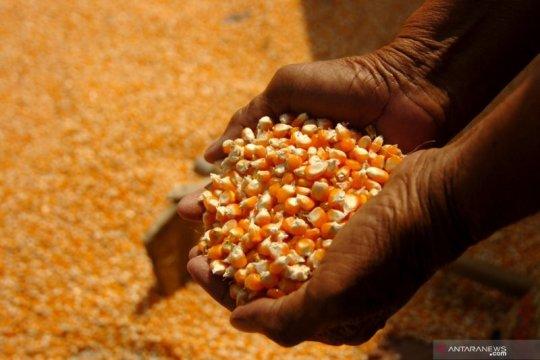 Wamentan minta pemda bangun kepercayaan petani tingkatkan produksi
