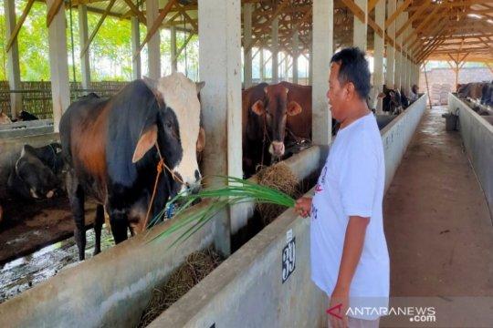 Batang siapkan dua desa jadi percontohan peternakan sapi perah
