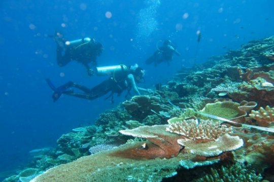 KKP bangun lagi pusat terumbu karang, kali ini di Maratua Kaltim