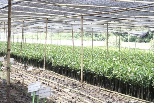 KKP tanam 105.000 bibit mangrove, cegah abrasi di Sumenep Jatim