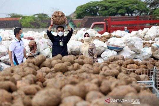 Mentan harap dunia tahu porang itu asalnya dari Indonesia