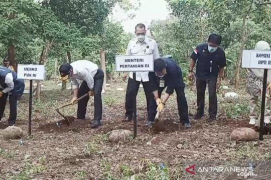 Menko PMK, Mentan, dan Gubernur Jatim panen porang di Klangon Madiun