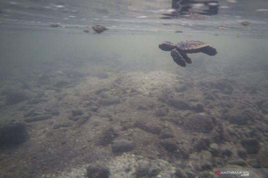 Akademisi IPB dorong pengelolaan perairan Jakarta berbasis konservasi