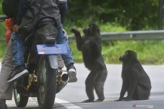 Dokter hewan pengidap pertama virus monyet di China meninggal
