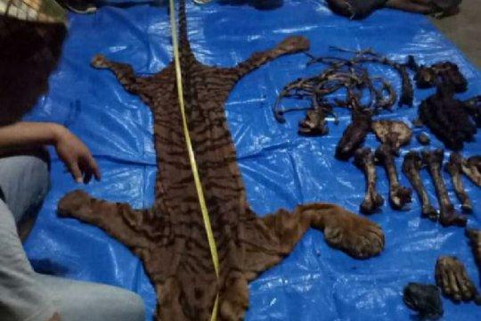 KLHK tangkap pelaku perdagangan kulit dan organ harimau di Bengkulu