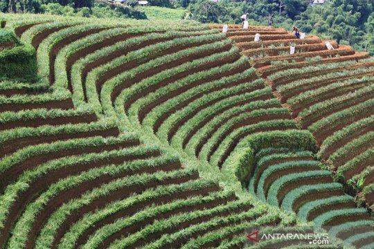 FAO apresiasi sektor pertanian Indonesia