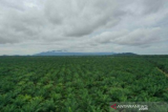 Anggota DPR ingin industri sawit fokus peremajaan lahan