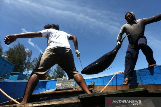 Potensi ekspor tuna Indonesia