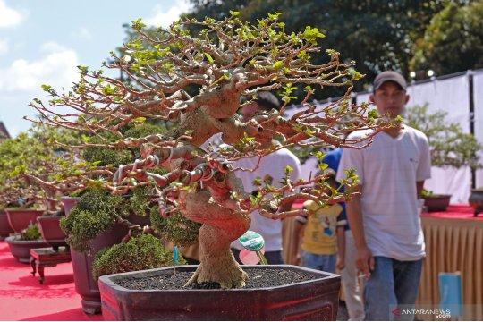 Yuk! Kita lihat uniknya tanaman bonsai