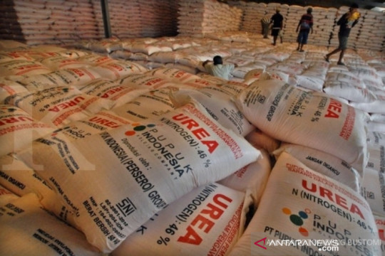 Realisasi penyaluran pupuk bersubsidi di Kalbar capai 31,64 persen