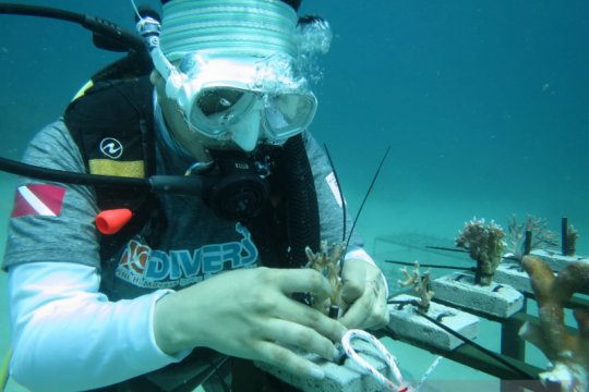 Rayakan HUT ke 75, BNI tanam 1.946 terumbu karang di Likupang