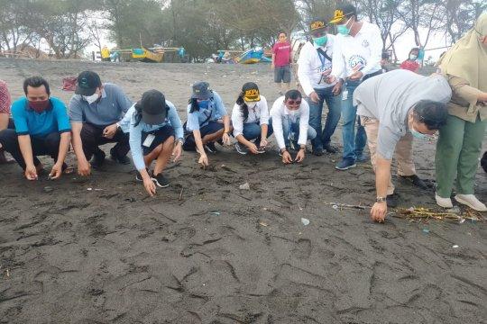 Puluhan tukik lekang dilepasliarkan di Pantai Bugel Kulon Progo