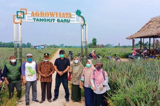 Hilirisasi produk nanas perkuat agrowisata Desa Tangkit Baru Jambi