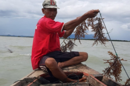 KKP sebut rumput laut bisa atasi persoalan limbah plastik