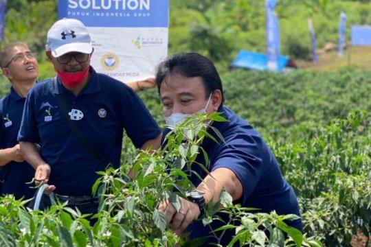 Pupuk Iskandar Muda panen perdana cabai hasil Agro Solution