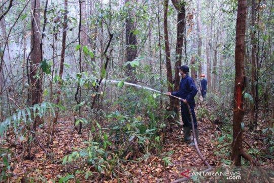 Palangka Raya kembangkan hutan kota 1.600 ha jadi ekowisata