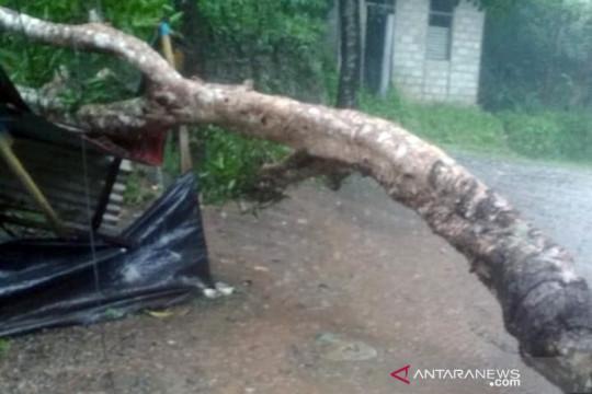 Hujan deras landa Ambon, listrik padam akibat tertimpa pohon tumbang