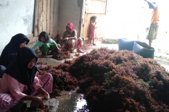 Dinas Lampung: Ekspor perikanan naik 2,3 persen periode Januari-Mei