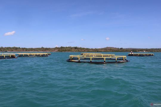 Pulau Semau jadi pilot project budidaya kerapu dan kakap