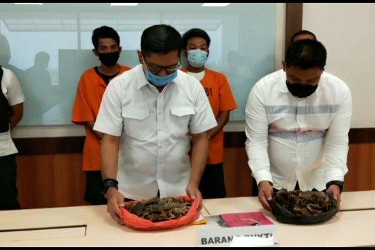 Ditreskrimsus Polda Riau gagalkan upaya jual beli sisik trenggiling