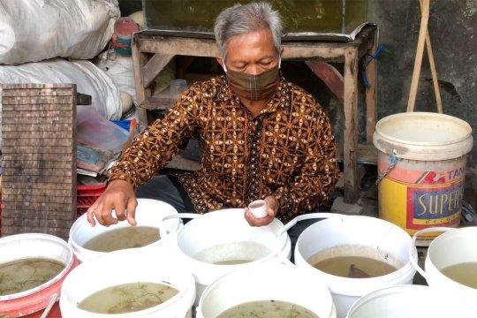 Pekalongan galakkan budidaya ikan tanaman Budik Tamber