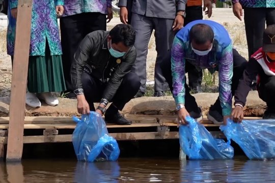 Pemkab Balangan tebar 10 ribu bibit ikan Papuyu