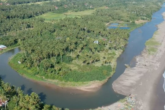 30 perusahaan Sumbar dukung program peremajaan pohon kelapa