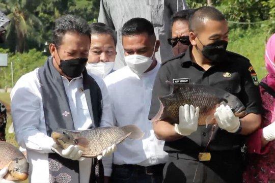 Menteri KP: Ikan air tawar bisa jadi pesaing salmon