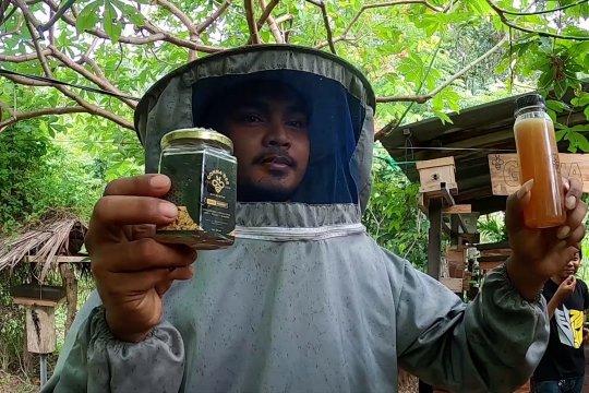 Menengok peternakan lebah madu kelulut