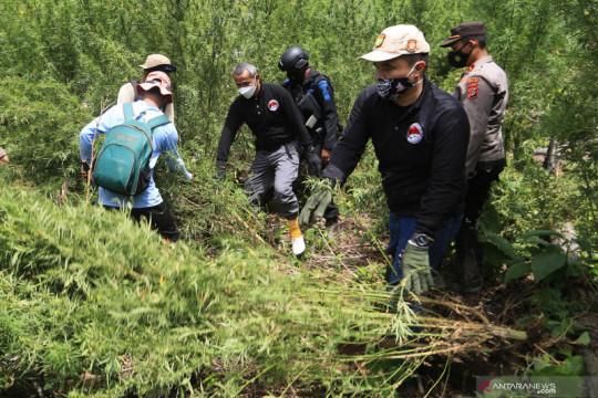 Polisi musnahkan tujuh hektare ladang ganja di Gunung Leuser Aceh