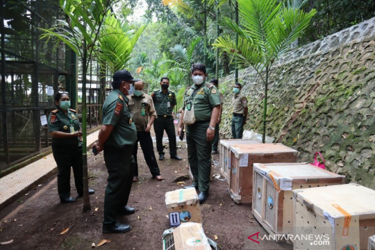 BBKSDA Papua terima translokasi 46 ekor burung dari Jateng dan Jatim
