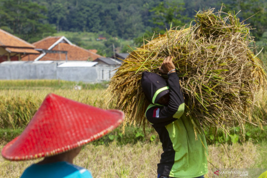 Ikut Program Makmur, petani Karawang panen padi hingga 9,3 ton/hektare