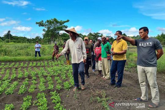 Pupuk Kaltim bina petani Papua tingkatkan pasokan pangan