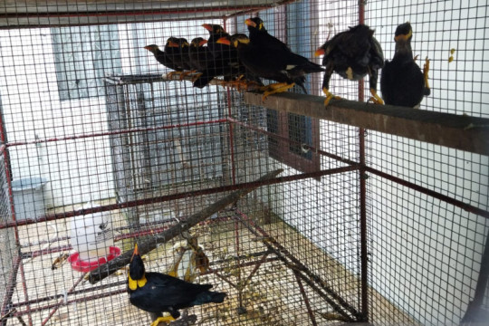 Gakkum KLHK hentikan perdagangan ratusan burung dilindungi di Kaltim