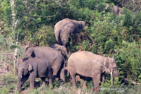 Seorang warga meninggal dunia diinjak gajah liar di Aceh