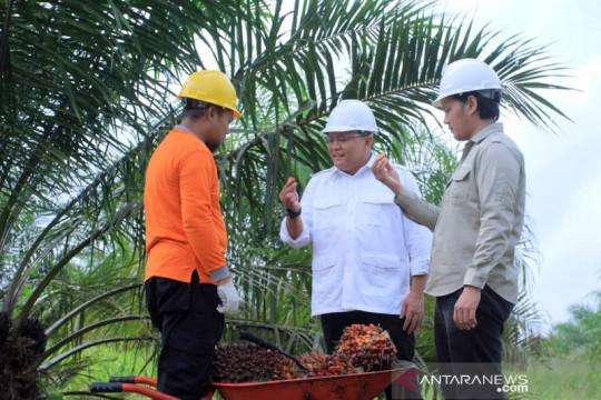 Musi Banyuasin targetkan peremajaan sawit rakyat 52.000 ha pada 2024