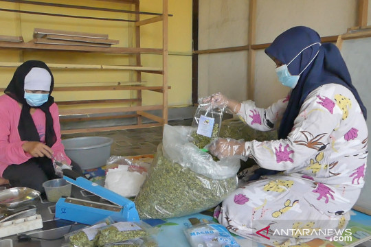 Pemprov Kalsel dukung teh daun kelor menjadi komoditas ekspor