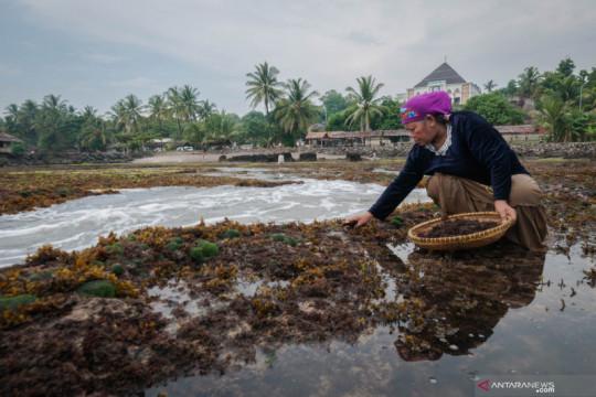 KKP dorong riset pemanfaatan limbah pengolahan komoditas rumput laut