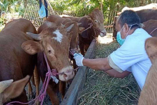 Pekalongan minta peternak tidak potong hewan ruminansia betina
