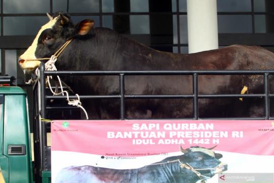 Presiden Jokowi siapkan 35 sapi untuk kurban