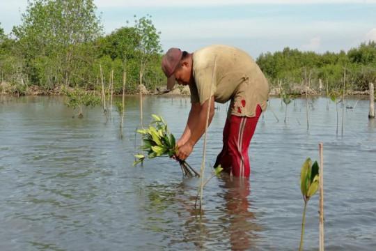 BRGM: Kerusakan ekosistem mangrove kategori kritis capai 637.000 ha