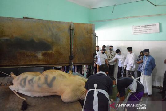 Baznas Yogyakarta masih buka pendaftaran kurban di RPH Giwangan