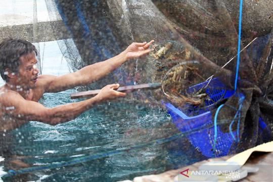 Pengamat: Regulasi baru terkait lobster sejalan prinsip berkelanjutan