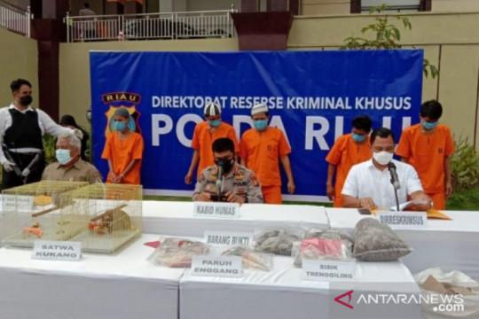 Polda Riau tangkap dua penyelundup delapan ekor kukang