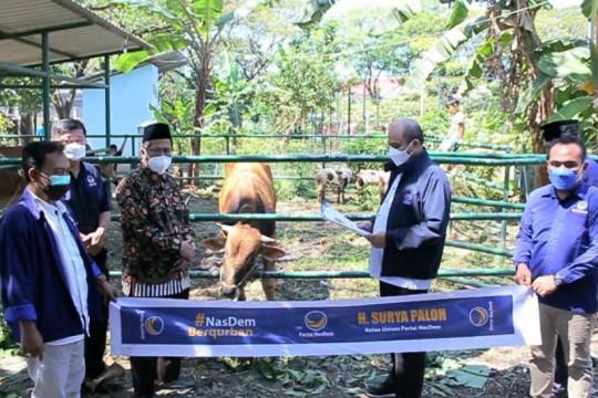 NasDem Jatim bagikan 64 ekor sapi ke ormas dan ponpes