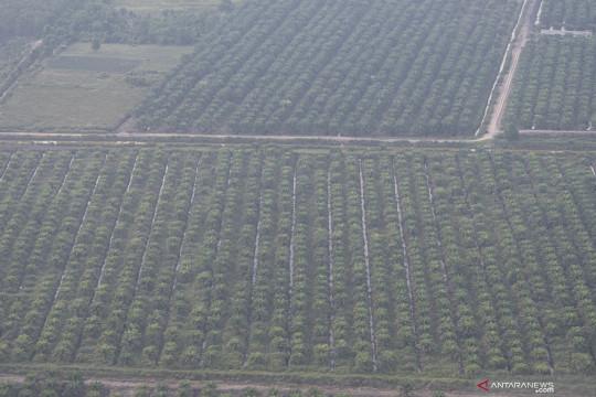 BPDP-KS: Kemitraan akan tingkatkan potensi kesejahteraan petani sawit