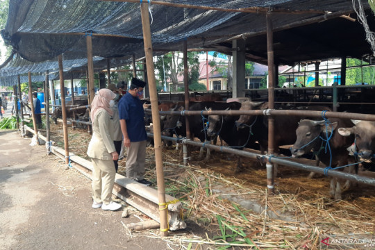 Penyembelihan kurban di Jakarta Timur telah terapkan prokes
