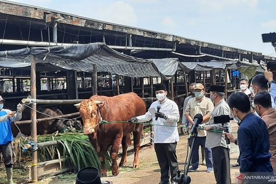Wagub DKI beli sapi kurban dari peternak di Jakarta Selatan