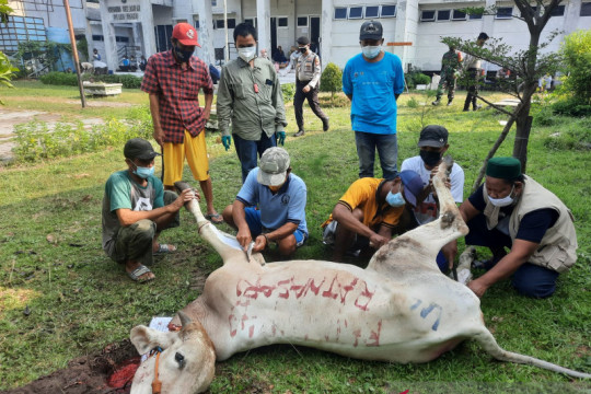 Kepulauan Seribu sembelih 224 hewan kurban pada Hari Raya Idul Adha
